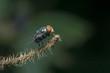 macro small flies of life