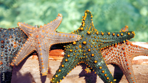 Plexiglas Olijf Starfish in the lagoon on the southern beach on the ocean. Marin