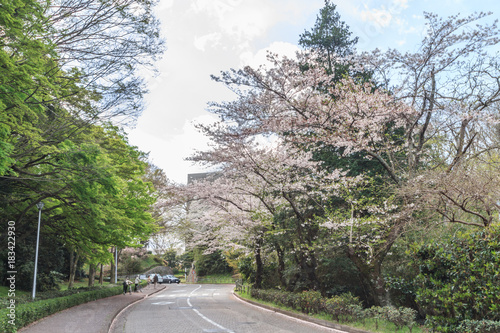 Deurstickers Khaki 春の佐倉城跡の風景