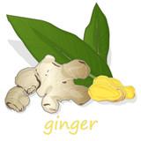 Fresh ginger on white background. - 183426382