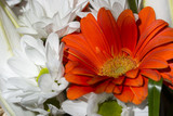 White and orange gerbera in a bouquet. - 183434726