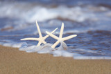 Starfish in the Sand With Seafoam Waves - 183437354