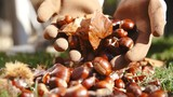 Dropping chestnuts from hands in slow motion 4K - 183451983