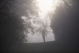 Morning misty landscape with tree silhouette in thick fog. - 183452539