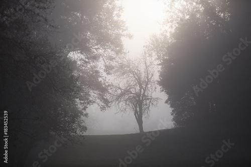 Ranek mglisty krajobraz z drzewną sylwetką w gęstej mgle.