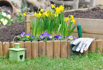 daffodils and viola in flower bed in a garden