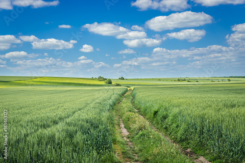 Fotobehang Zomer Ukrainian landscape - dust road amongs fields stretching to the horizon against the blue sky