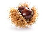 Chestnut in husk - 183463924
