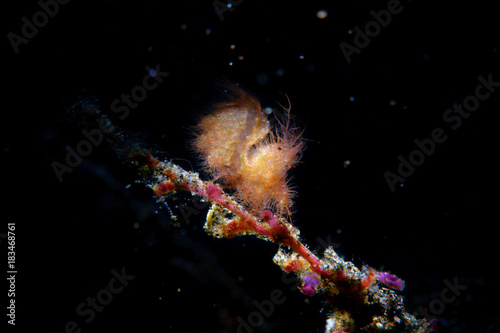 Staande foto Heelal shrimp with eggs