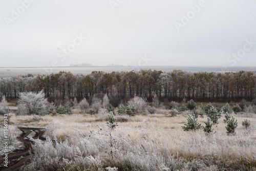 Papiers peints Gris field forest in winter hoarfrost