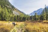Trail in Kuiguk walley. Trekking. Altai mountains landscape - 183476779