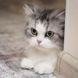Cute cat portrait, square photo