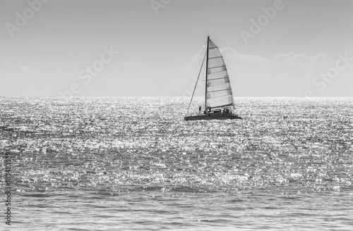 catamaran en mer, noir et blanc Poster