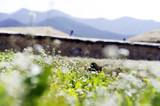 Wild flower - 183491319