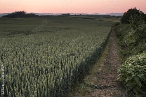 Deurstickers Khaki 美瑛の夕景、麦畑と夕日