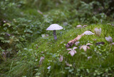 Single mushroom in the autumnal forest. - 183497118