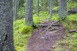 Difficult and tricky path in the forest. Lots of slippery stones and roots on the path. - 183497925