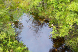 Small pond on the swamp with reflections to the trees. - 183499728