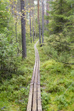 Walking and hiking path in the forest in Finland. Wooden duckboard in the coniferous autumnal forest in Finland. - 183500573