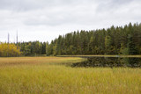 Landscape view on an autumnal forest in the Finland. Small lake. Colorful grass and leaves. Calm scenery. - 183501109