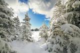 schöner Wintertag im Wald - 183512555
