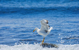 The white seagull against sea background. - 183515715