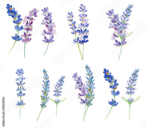zbior-kwiatow-lawendy-akwarela-na-bialym-tle