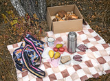 Breakfast in the woods while collecting mushrooms. - 183528356