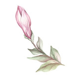 Image of blooming magnolia branch. Watercolor illustration - 183548157