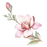 Image of blooming magnolia branch. Watercolor illustration - 183548184