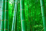 緑が萌える竹林