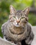 A green eyed tabby cat sits on a block fence.