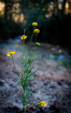 Riverside Wildflowers in Mountains - 183560792
