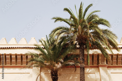 Plexiglas Marokko Classic moroccan architecture, wall with palm tree