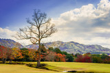 Landscape of standing dead tree among green and red life trees with mountain in spring time, different of life and nature concepts. - 183579527