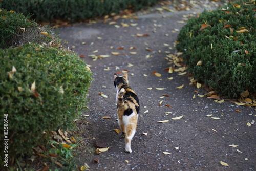 Fotobehang cute lovely street cat