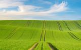 blue sky over a green field