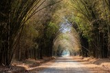 Tunnel bamboo trees road in summer : Khao kho, Phetchabun, Thailand