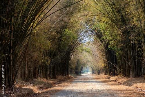 Plexiglas Bamboe Tunnel bamboo trees road in summer : Khao kho, Phetchabun, Thailand