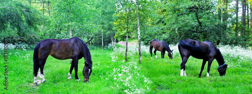 Panoramic image of flowering meadows with grazing horses. - 183602937