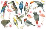Tropical bird set - 183604796