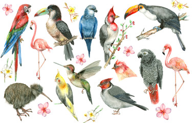 Tropical bird set