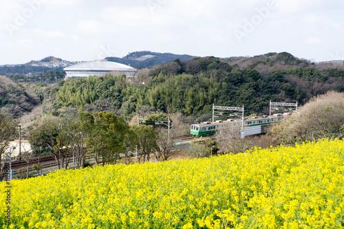 Foto op Canvas Geel 菜の花畑