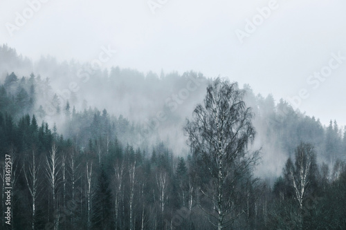 forest on mountain in fog  - 183619537