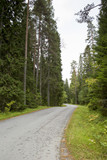 Curvy asphalt road in the middle of the Finnish forest. - 183624919