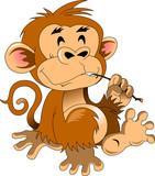 funny monkey - 183628910