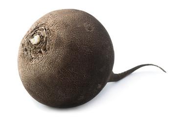 Black radish vegetable closeup