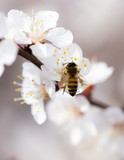 bee on a flower in the nature. macro - 183636154