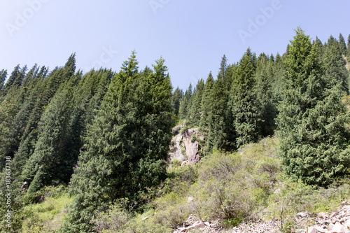 Fotobehang Lente beautiful Christmas tree in the mountains in summer