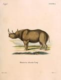 Illustration of a rhinoceros - 183640372